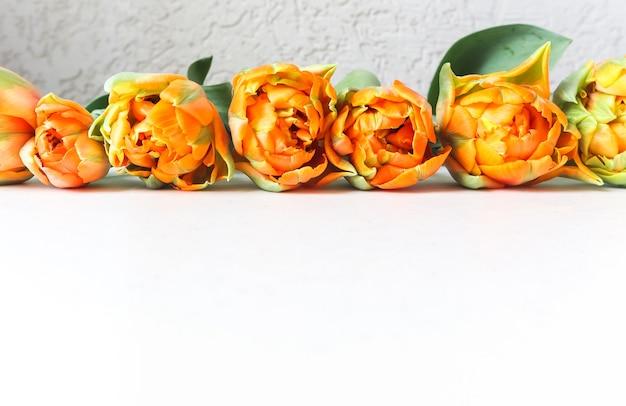 Rij van mooie oranje tulpen op witte achtergrond. perfect voor wenskaarten op de achtergrond