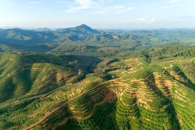 Rij van palm plantage tuin op hoge berg in phang nga thailand luchtfoto drone schot