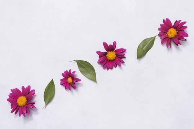 Rij van roze bloemen en groene bladeren