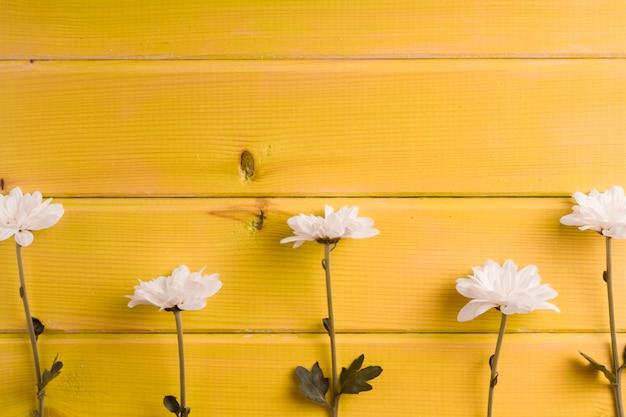 Rij van witte bloemen op gele houten achtergrond