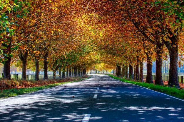 Rijden op de snelweg door een tunnel van herfstachtige boomkleur