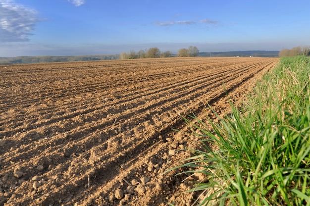 Rijen in een veld