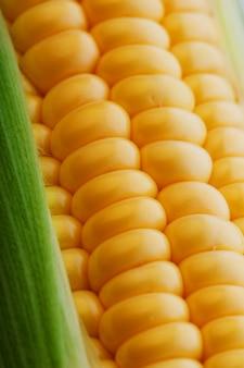 Rijen verse en rijpe gele maïskorrels