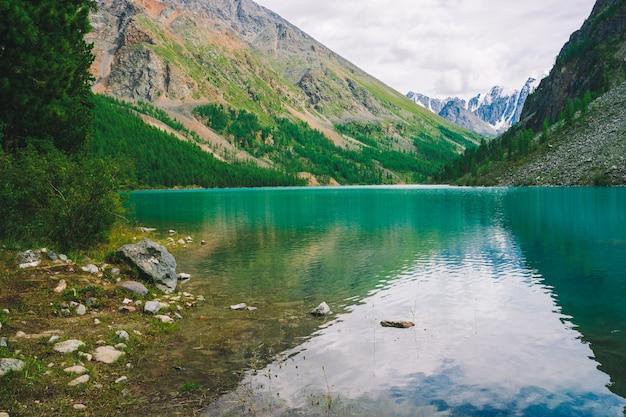 Rijke vegetatie van hooglanden tegen bergmeer tegen. prachtige gigantische besneeuwde bergen weerspiegeld in water. kreek vloeit voort uit gletsjer. verbluffend sfeervol landschap van majestueuze altai-natuur.