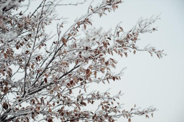 Rijp bedekt boomtakken tegen de hemel
