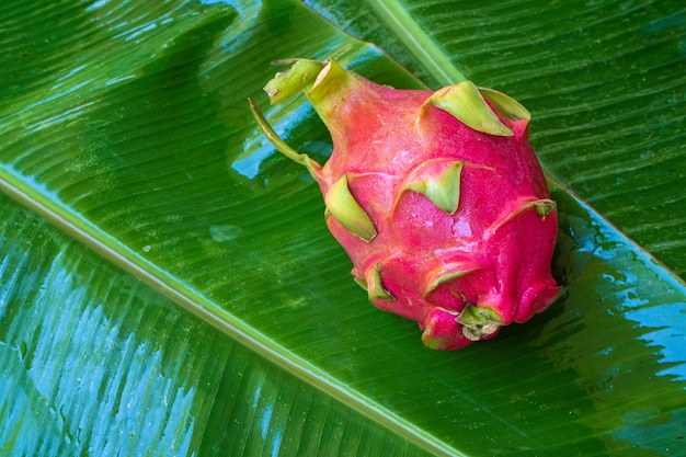 Rijp drakenfruit op een nat groen blad