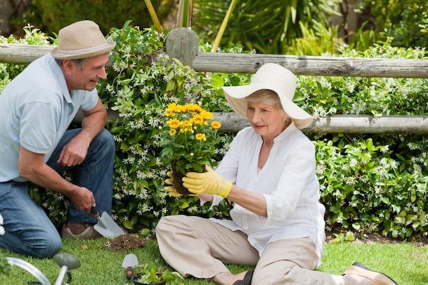 Rijp paar dat in de tuin werkt
