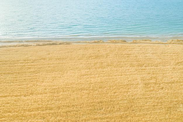 Rijp tarweveld aan zee met zacht licht en zachte golven, luchtfoto