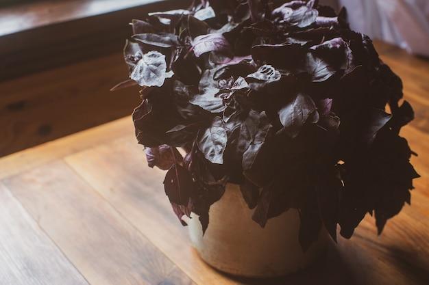 Rijp vers gezond dieet vegetarisch voedsel met vitaminen paarse basilicum op houten tafelblad weergave