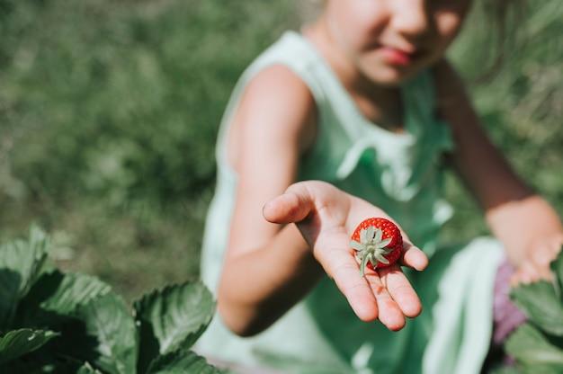 Rijpe aardbei in de meisjeshand van een kind op organische aardbeilandbouwbedrijf