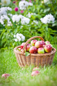 Rijpe appels in een mand op het groene gras