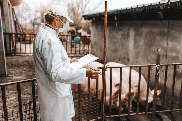 Rijpe dierenarts in witte jas klembord houden en het controleren van de gezondheid van varkens in kooi. buitenkant van het land.