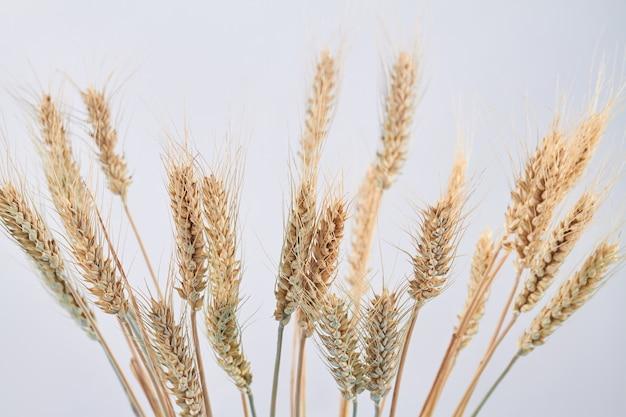 Rijpe gedroogde tarweaartjes geïsoleerd op een witte achtergrond
