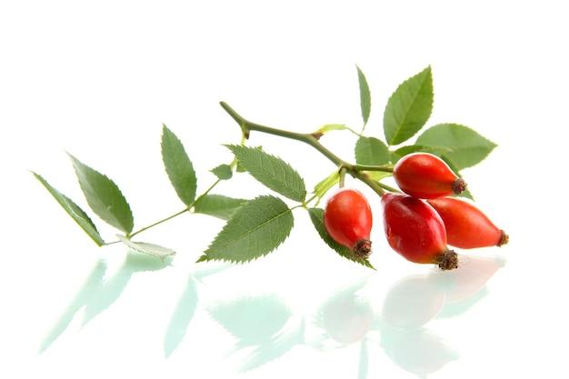 Rijpe hippe rozen op tak met bladeren, geïsoleerd op wit