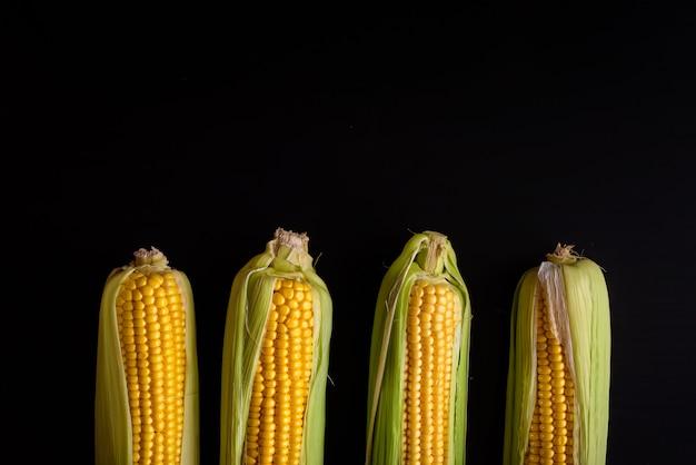 Rijpe maïs geïsoleerd. gele maïskolven in rij. gezonde voeding, biologische producten, herfstoogst