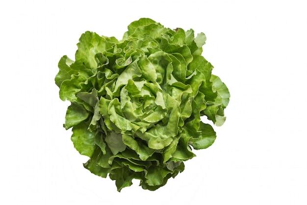 Rijpe organische groene salade romano die op wit wordt geïsoleerd
