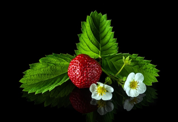 Rijpe rode aardbeien met bladeren en bloemen op een zwarte achtergrond