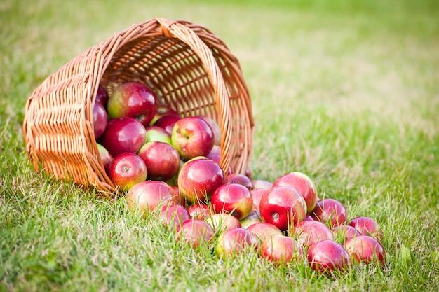 Rijpe rode appels in de mand en op het groene gras