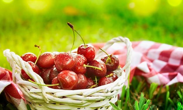 Rijpe rode biologische zoete kers in de tuin in de zomer. agrarische achtergrond.