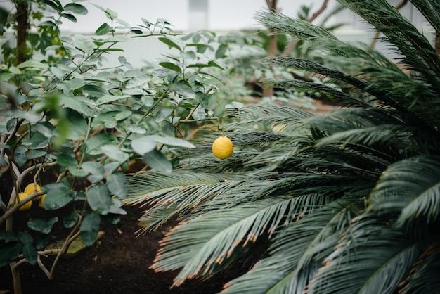 Rijpe tropische vruchten groeien op bomen. jungle. woud