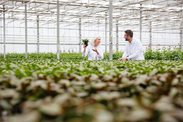 Rijpe tuinlieden die in groen werken