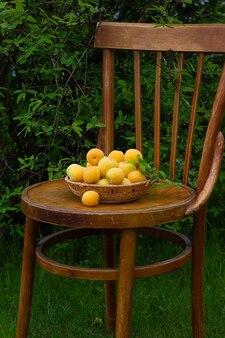 Rijpe verse abrikozen en bladeren in rieten plaat op houten uitstekende stoel met groene tuin