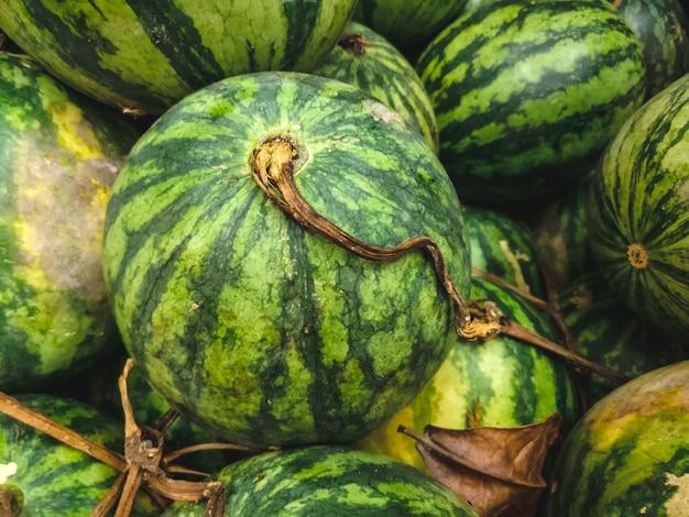 Rijpe watermeloenenantenne