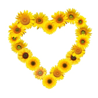 Rijpe zonnebloem met gele bloemblaadjes en donker midden