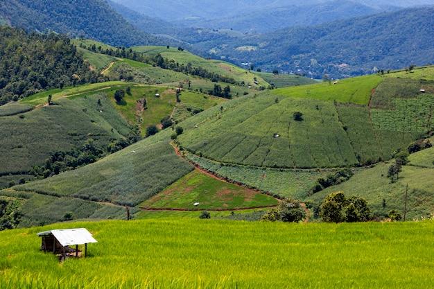 Rijst aanplant op de berg, rijstterrassen bij ban pa pong piengin thailand Premium Foto