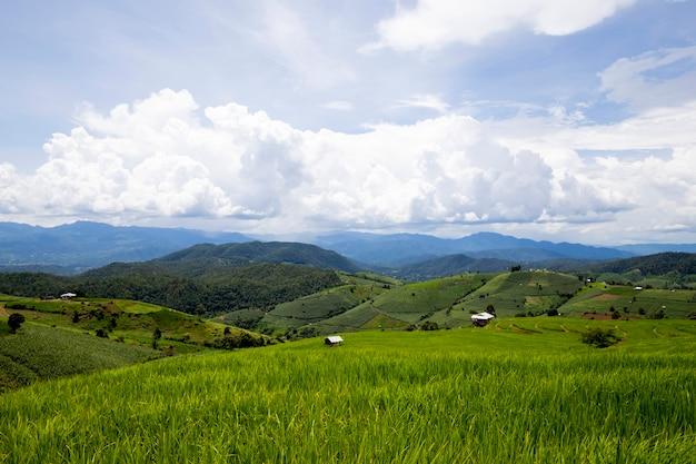 Rijst aanplant op de berg, rijstterrassen bij ban pa pong piengin thailand