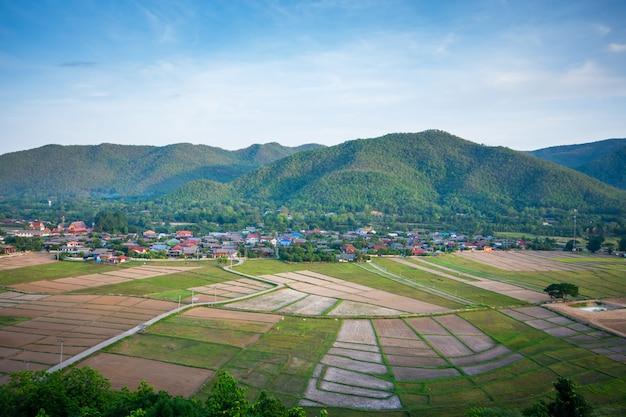 Rijst veld, een natuurlijke schoonheid op berg in nan, khun nan rijstterrassen, boklua nan provincie, thailand