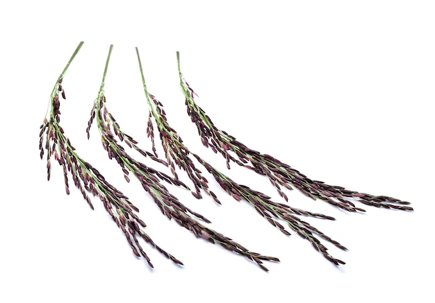 Rijstbes geïsoleerd op witte achtergrond