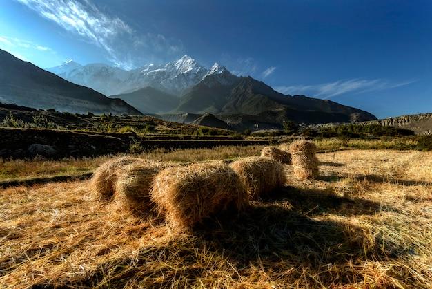 Rijstboerderij in muktinath village, annapurna circuit, himalaya, nepal