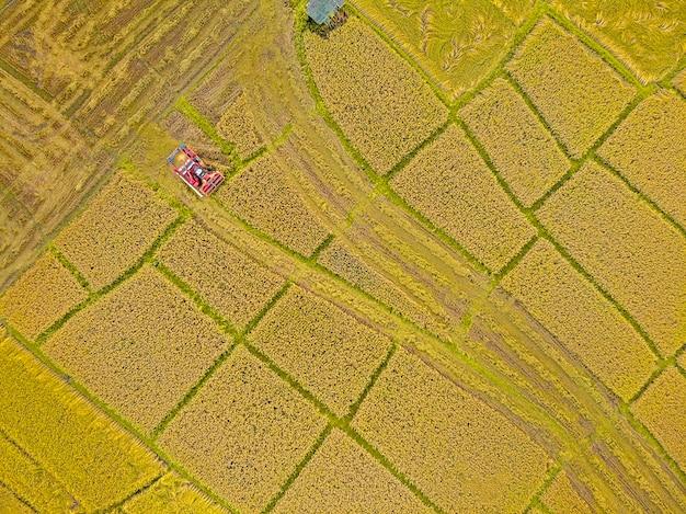 Rijstboerderij op oogstseizoen door boer met maaidorsers. en tractor op rijst veld plantage patroon. foto door drone vanuit vogelperspectief in platteland