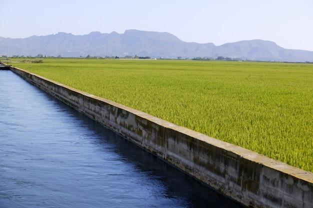 Rijstgraangroene velden en blauw irrigatiekanaal