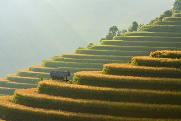 Rijstterras aan tijdens zonsondergang, noordoostelijk gebied van vietnam