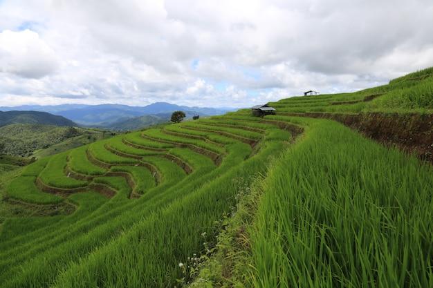 Rijstterrassen in thailand ban pa bong biang, mae chaem, chiang mai, fris groen