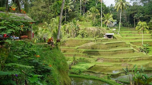 Rijstterrasvelden, ubud, bali