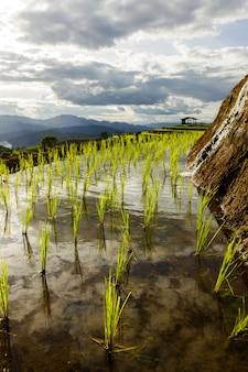 Rijstveld bij mae cham chiangmai noord-thailand
