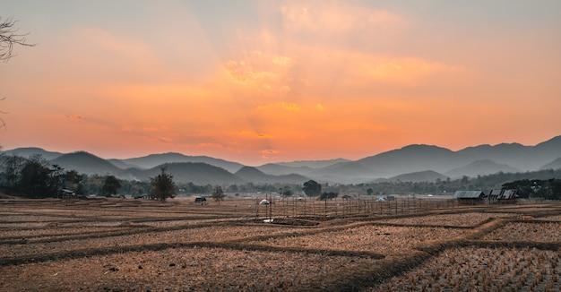 Rijstveld en hut na de oogst in de avond