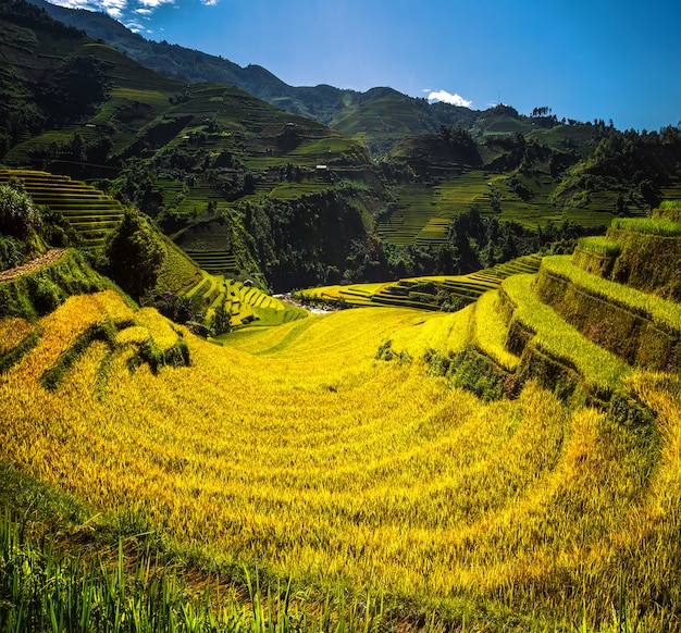 Rijstveld en rijstterras in mu cang chai