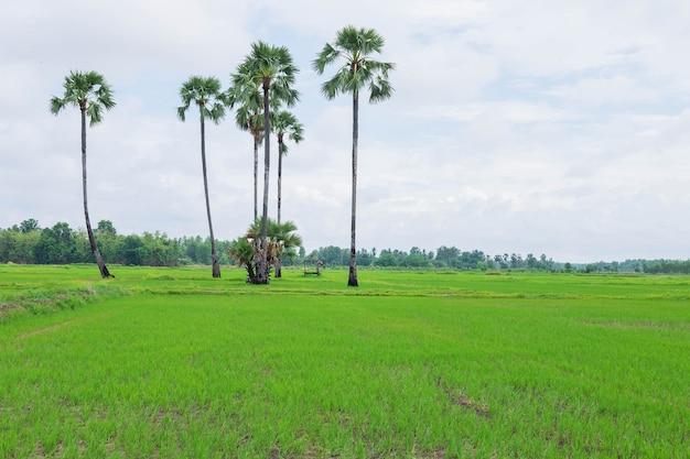 Rijstvelden bedekt met regenwolken