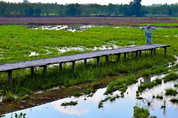 Rijstvelden en houten brug met de vogelverschrikker