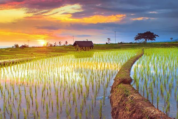 Rijstvelden noord bengkulu regentschap verbazingwekkende natuur kleur en lucht prachtige ochtend zonsopgang