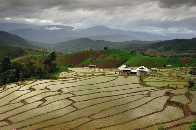 Rijstvelden op terrassen in thailand, noord
