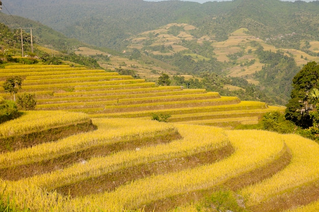 Rijstvelden op terrassen van khuoi my, ha giang provincie, noord-vietnam