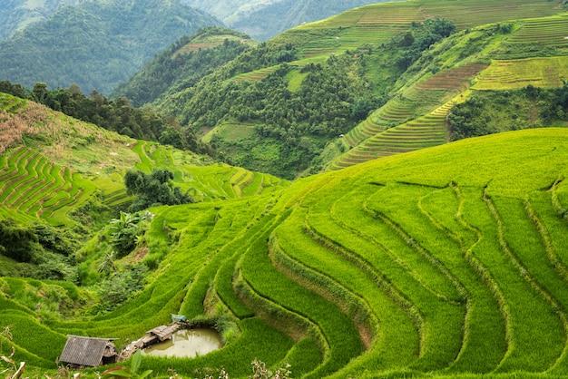 Rijstvelden op terrassen van mu cang chai vietnam
