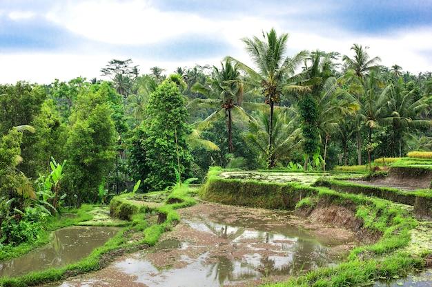 Rijstvelden op terrassen van thailand, vietnam of bali