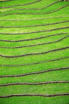 Rijstvelden terrassen. in de buurt van sapa, mui ne