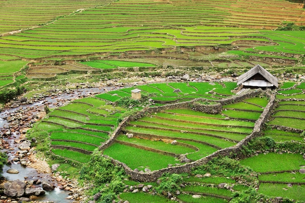 Rijstvelden terrassen